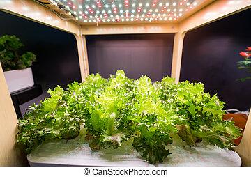 Las verduras hidroponicas orgánicas crecen en el interior de la agricultura agrícola