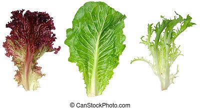 Lechuga de hojas rojas, romaine y hojas endivias