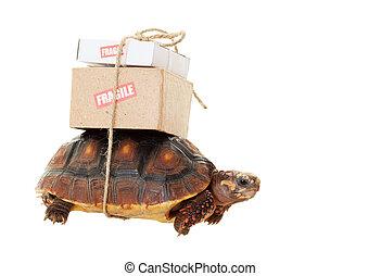 lento, tortuga, correo