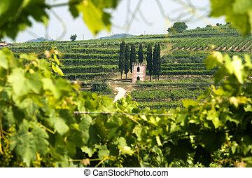 lessinia, verano, poco, veneto, viñas, colina, iglesia, (verona, soave, italy)