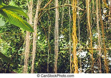 Lianas en una selva con vegetación tropical