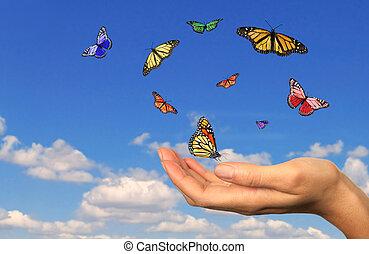 liberado, tenencia de la mano, buttterflies