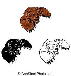 libro colorear, oso, caracter