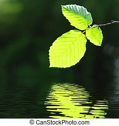 licencia, agua, verde