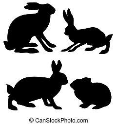 liebre, conejo blanco, siluetas, plano de fondo