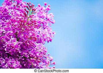 Lila púrpura en el cielo azul
