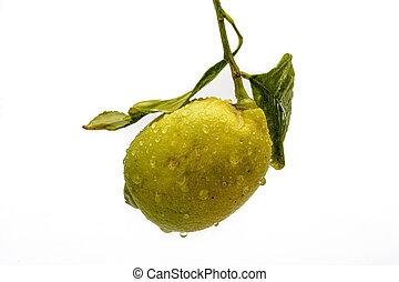 Limón solitario en fondo blanco