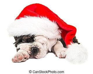 Lindo cachorro de perro toro inglés con sombrero de Santa