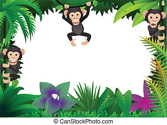 lindo, chimpancé, selva