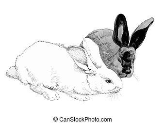 lindo, conejos, illustration., sketched