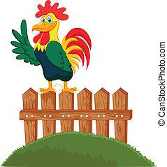 Lindo gallo cantando en la cerca