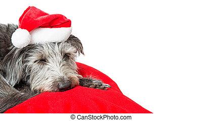 Lindo lugar para copiar perros navideños dormidos