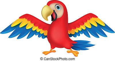 lindo, pájaro, loro, caricatura