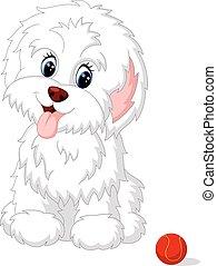 Lindo perrito faldero blanco posando