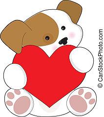 lindo, perrito, valentine