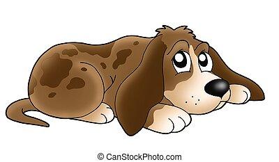 lindo, perro, acostado