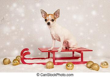Lindo perro chihuahua sentado en un trineo rojo en un escenario de navidad como una tarjeta de navidad