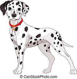 Lindo perro dálmata