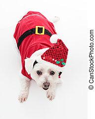 Lindo perro de Navidad