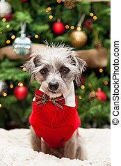 Lindo perro en suéter por árbol de Navidad