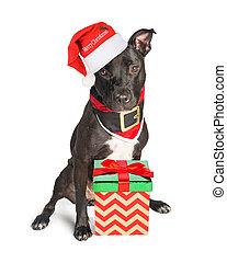 Lindo perro vestido como Santa de Navidad