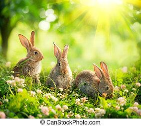 lindo, poco, conejitos, arte, pradera, rabbits., diseño, pascua