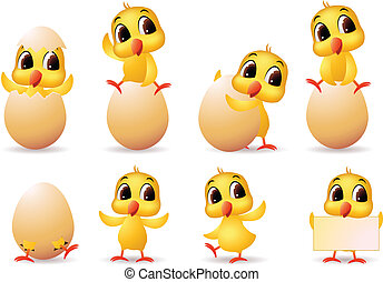 lindo, poco, polluelos