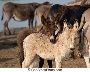 Lindos burros juguetones