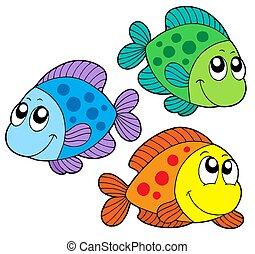 Lindos peces de colores