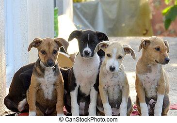 Lindos y llenos de cachorros