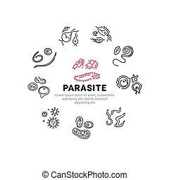 lineal, humano, parasites., icons., vector, conjunto