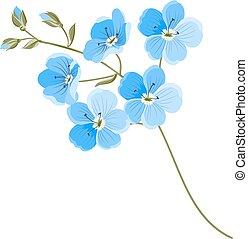 lino, flor