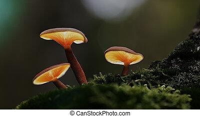 Linternas de hongos en el bosque de otoño