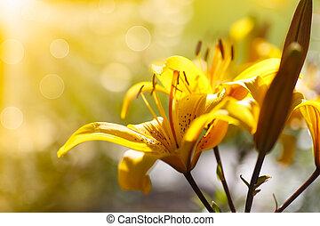 Lirios amarillos en un día soleado