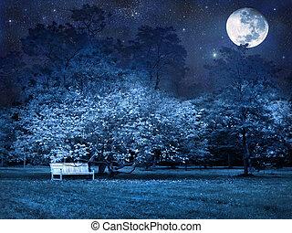 lleno, parque, luna, noche