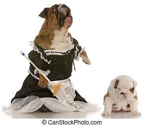 llevando, posición, piso, bulldog, vestido, enojado, inglés, -, arriba, al lado de, criada, dramático, madre, presumido, perrito, expresión
