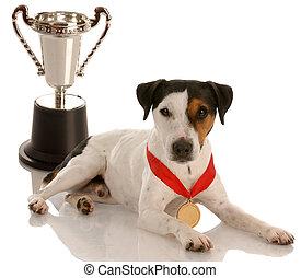 llevando, trofeo, campeón, oro, sentado, terrier, russel, -, perro, gato, medalla