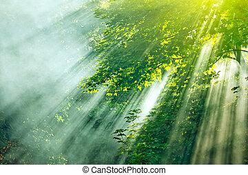 Lluvia solar del bosque
