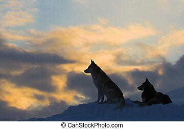 lobos, (dogs), siluetas, dos