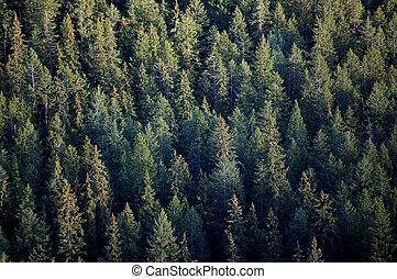 Los árboles del bosque