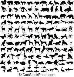 Los animales coleccionan siluetas