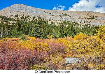 Los arbustos amarillos de otoño