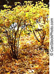 Los arbustos de otoño brillan en la luz del sol