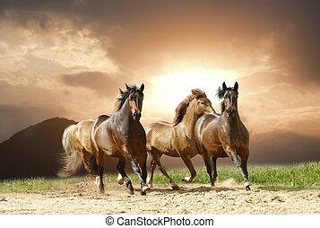 Los caballos corren