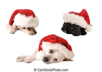 Los cachorros de Navidad