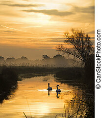 Los cisnes y los niveles de pevensey al amanecer