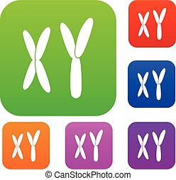 Los cromosomas humanos ponen colores