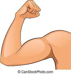 Los músculos del brazo del hombre