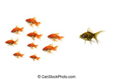 Los peces dorados están fuera de la multitud