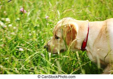 Los perros juegan en la hierba